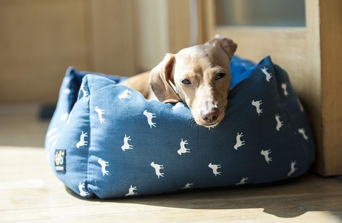 Modrý pelech pre psa