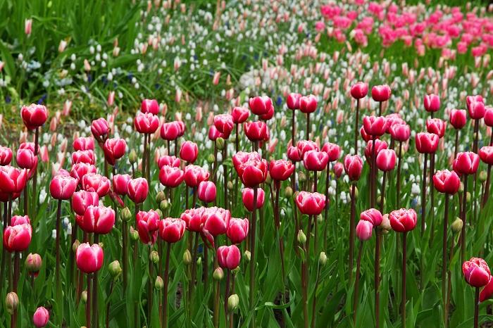 Ako si upraviť dizajn zahrady?